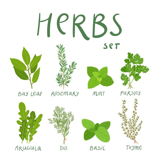 Ziola Herbs Vector